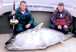 Bluefin tuna, Clifden 2002